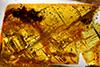 http://mczbase.mcz.harvard.edu/specimen_images/entomology/paleo/large/PALE-26869_Apocrita_1.jpg
