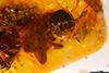 http://mczbase.mcz.harvard.edu/specimen_images/entomology/paleo/large/PALE-26869_syn2_Apocrita.jpg