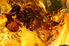 http://mczbase.mcz.harvard.edu/specimen_images/entomology/paleo/large/PALE-26869_syn5_Apocrita.jpg