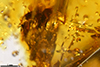http://mczbase.mcz.harvard.edu/specimen_images/entomology/paleo/large/PALE-26869_syn8_Pterygota.jpg