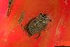 http://mczbase.mcz.harvard.edu/specimen_images/entomology/paleo/large/PALE-26913_Arthropoda.jpg