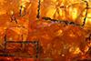 http://mczbase.mcz.harvard.edu/specimen_images/entomology/paleo/large/PALE-26921_Araneae_1.jpg