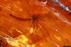 http://mczbase.mcz.harvard.edu/specimen_images/entomology/paleo/large/PALE-26921_syn3_Nematocera.jpg