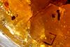 http://mczbase.mcz.harvard.edu/specimen_images/entomology/paleo/large/PALE-26929_Araneae_1.jpg