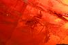 http://mczbase.mcz.harvard.edu/specimen_images/entomology/paleo/large/PALE-26934_syn2_Nematocera.jpg