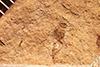 http://mczbase.mcz.harvard.edu/specimen_images/entomology/paleo/large/PALE-27178_Mesochorus_sp.jpg