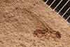 http://mczbase.mcz.harvard.edu/specimen_images/entomology/paleo/large/PALE-272_Eutermes_meadii_type_1.jpg