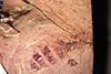 http://mczbase.mcz.harvard.edu/specimen_images/entomology/paleo/large/PALE-27318_Miomyrmex_impactus.jpg