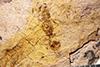 http://mczbase.mcz.harvard.edu/specimen_images/entomology/paleo/large/PALE-27375_Aphaenogaster_mayri.jpg