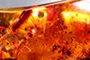 http://mczbase.mcz.harvard.edu/specimen_images/entomology/paleo/large/PALE-27690_Platypodinae.jpg