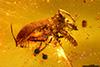 http://mczbase.mcz.harvard.edu/specimen_images/entomology/paleo/large/PALE-27693_syn1_Curculionidae.jpg