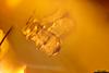 http://mczbase.mcz.harvard.edu/specimen_images/entomology/paleo/large/PALE-27697_Cassidinae_1.jpg