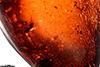 http://mczbase.mcz.harvard.edu/specimen_images/entomology/paleo/large/PALE-27698_Platypodinae_2.jpg