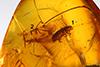 http://mczbase.mcz.harvard.edu/specimen_images/entomology/paleo/large/PALE-27699_Scolytinae.jpg