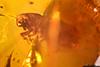 http://mczbase.mcz.harvard.edu/specimen_images/entomology/paleo/large/PALE-27699_syn1_Scolytinae.jpg