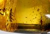 http://mczbase.mcz.harvard.edu/specimen_images/entomology/paleo/large/PALE-27701_Platypodinae.jpg