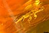 http://mczbase.mcz.harvard.edu/specimen_images/entomology/paleo/large/PALE-27701_syn1_Platypodinae.jpg