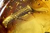 http://mczbase.mcz.harvard.edu/specimen_images/entomology/paleo/large/PALE-27703_Platypodinae.jpg