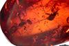 http://mczbase.mcz.harvard.edu/specimen_images/entomology/paleo/large/PALE-27708_Curculionidae.jpg