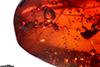 http://mczbase.mcz.harvard.edu/specimen_images/entomology/paleo/large/PALE-27708_syn2_Apocrita.jpg