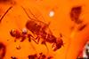 http://mczbase.mcz.harvard.edu/specimen_images/entomology/paleo/large/PALE-27712_syn3_Brachycera.jpg