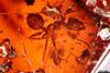 http://mczbase.mcz.harvard.edu/specimen_images/entomology/paleo/large/PALE-27712_syn4_Formicidae.jpg
