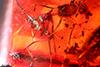 http://mczbase.mcz.harvard.edu/specimen_images/entomology/paleo/large/PALE-27712_syn9_Formicidae.jpg