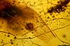 http://mczbase.mcz.harvard.edu/specimen_images/entomology/paleo/large/PALE-27713_syn4_Isoptera.jpg