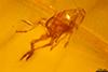 http://mczbase.mcz.harvard.edu/specimen_images/entomology/paleo/large/PALE-27713_syn6_Auchenorrhyncha.jpg
