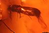 http://mczbase.mcz.harvard.edu/specimen_images/entomology/paleo/large/PALE-27721_syn1_Platypodinae_1.jpg