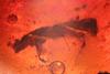 http://mczbase.mcz.harvard.edu/specimen_images/entomology/paleo/large/PALE-27726_Platypodinae.jpg