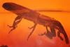 http://mczbase.mcz.harvard.edu/specimen_images/entomology/paleo/large/PALE-27737_Curculionidae.jpg