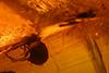 http://mczbase.mcz.harvard.edu/specimen_images/entomology/paleo/large/PALE-27740_Apioninae.jpg