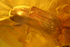 http://mczbase.mcz.harvard.edu/specimen_images/entomology/paleo/large/PALE-27743_syn2_Scolytinae.jpg