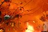 http://mczbase.mcz.harvard.edu/specimen_images/entomology/paleo/large/PALE-27745_syn3_Apocrita.jpg
