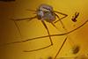http://mczbase.mcz.harvard.edu/specimen_images/entomology/paleo/large/PALE-27745_syn4_Nematocera.jpg