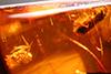 http://mczbase.mcz.harvard.edu/specimen_images/entomology/paleo/large/PALE-27757_Platypodinae.jpg