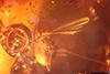 http://mczbase.mcz.harvard.edu/specimen_images/entomology/paleo/large/PALE-27769_syn5_Chironomoidea.jpg
