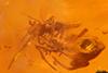 http://mczbase.mcz.harvard.edu/specimen_images/entomology/paleo/large/PALE-27803_syn12_Araneae.jpg