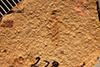 http://mczbase.mcz.harvard.edu/specimen_images/entomology/paleo/large/PALE-278_Parotermes_fodinae_type_1.jpg