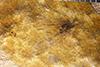 http://mczbase.mcz.harvard.edu/specimen_images/entomology/paleo/large/PALE-28934_Pterygota.jpg