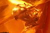 http://mczbase.mcz.harvard.edu/specimen_images/entomology/paleo/large/PALE-29015_syn2_Formicidae.jpg