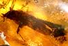 http://mczbase.mcz.harvard.edu/specimen_images/entomology/paleo/large/PALE-29054_Platypodinae.jpg