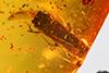 http://mczbase.mcz.harvard.edu/specimen_images/entomology/paleo/large/PALE-29065_syn1_Platypodinae.jpg