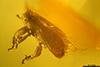 http://mczbase.mcz.harvard.edu/specimen_images/entomology/paleo/large/PALE-29070_syn1_Curculionidae.jpg