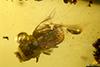 http://mczbase.mcz.harvard.edu/specimen_images/entomology/paleo/large/PALE-29078_syn1_Scolytinae.jpg