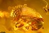 http://mczbase.mcz.harvard.edu/specimen_images/entomology/paleo/large/PALE-29080_syn1_Scolytinae.jpg