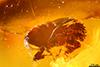 http://mczbase.mcz.harvard.edu/specimen_images/entomology/paleo/large/PALE-29087_syn1_Scolytinae.jpg