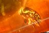 http://mczbase.mcz.harvard.edu/specimen_images/entomology/paleo/large/PALE-29087_syn6_Scolytinae.jpg