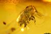 http://mczbase.mcz.harvard.edu/specimen_images/entomology/paleo/large/PALE-29090_Scolytinae.jpg